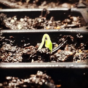 Hello Eggplant!